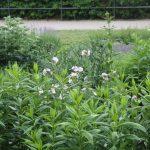 2016-dechaneigarten-havelberg-juni-IMG_6265