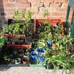 2016-gartengruppe-pflanzen-IMG_2820