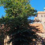 Gottesdienste, Veranstaltungen, Konzerte, Dombesichtigung